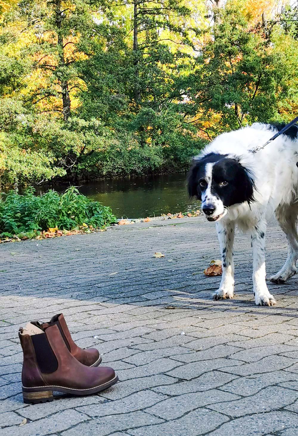 Oak & Hyde Chelsea Boots braun